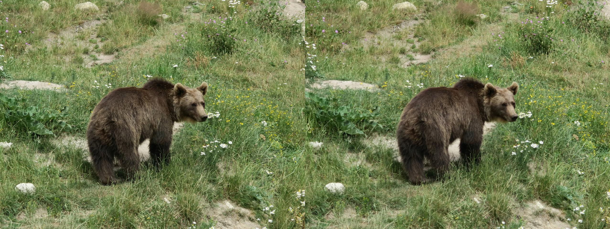 Bear in a French animal park