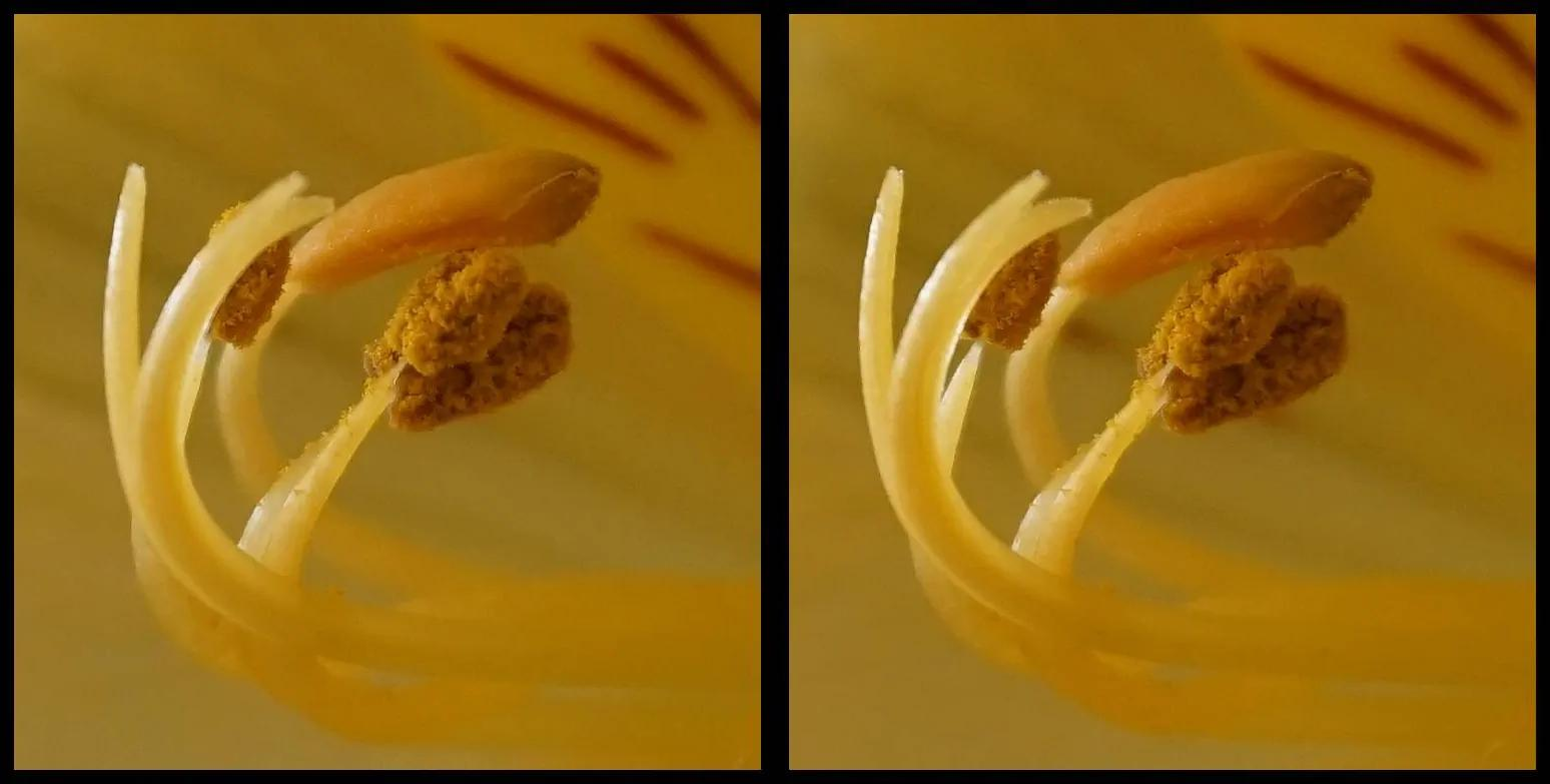 Alstromeria stigma and stamens