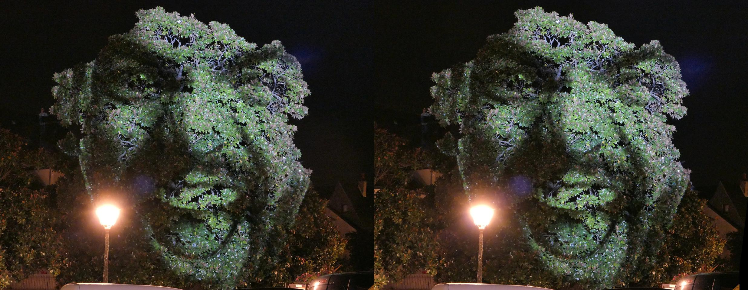 Lightpainted tree face