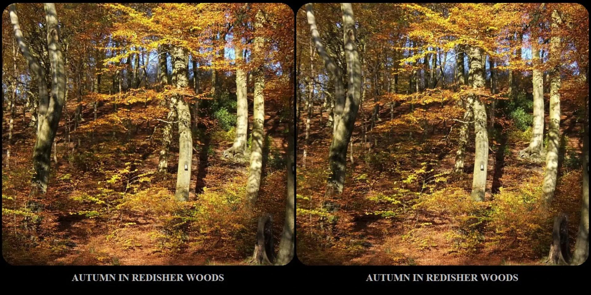 AUTUMN IN REDISHER WOODS