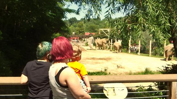 Elephants at the Cleveland Zoo