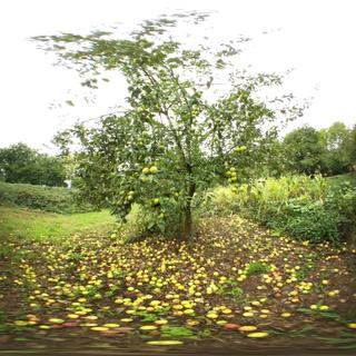 Apple tree fisheye test 2