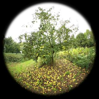 Apple tree fisheye test